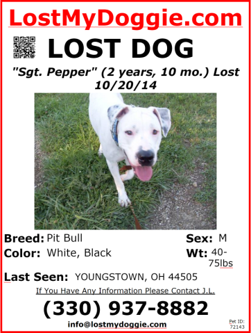 Lost Pet Let Fox 8 Viewers Help Fox 8 Cleveland Wjw