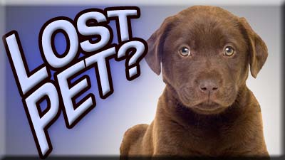 Lost Pet Let Fox 8 Viewers Help Fox8 Com