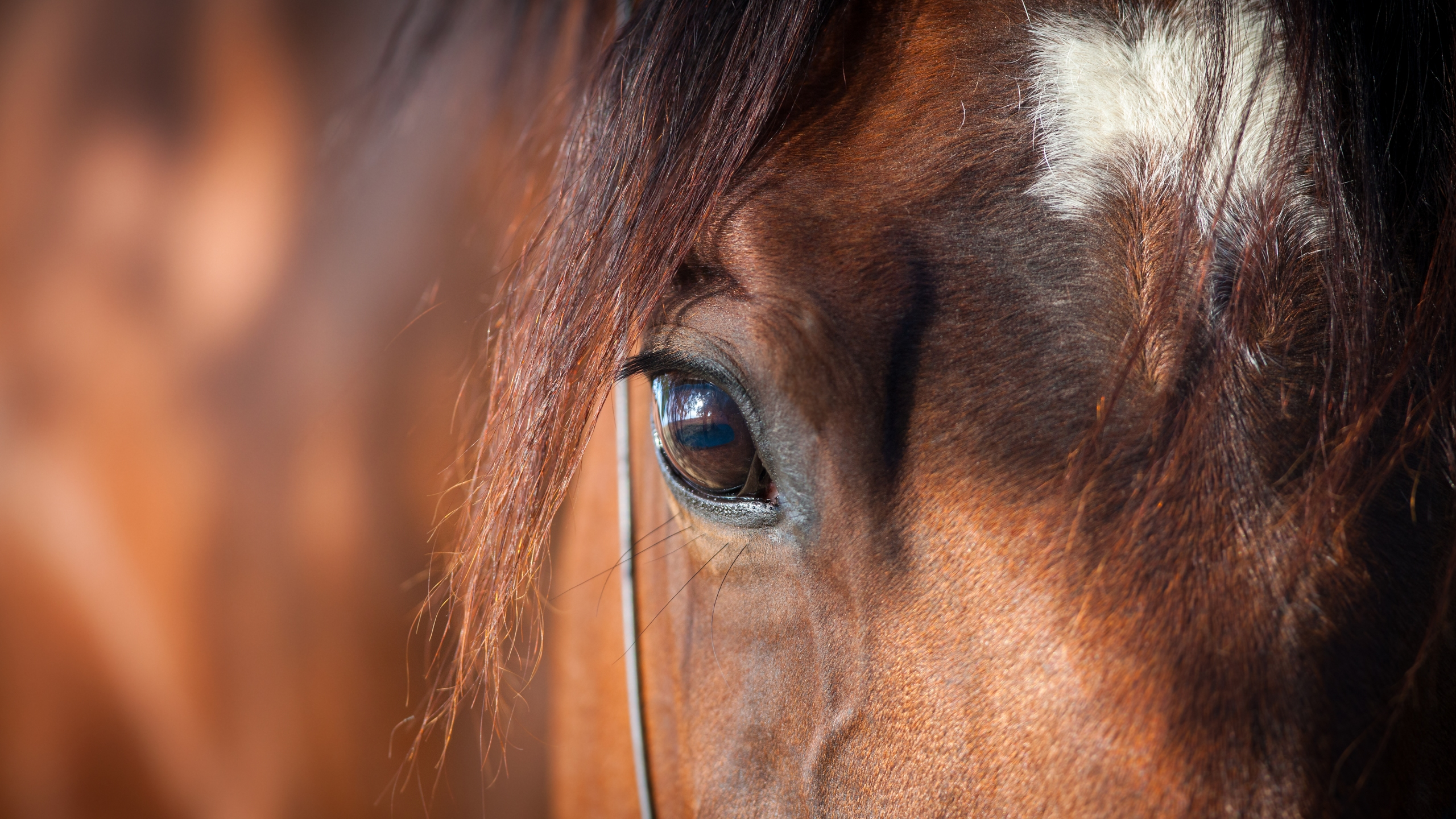 coronavirus equine symptoms