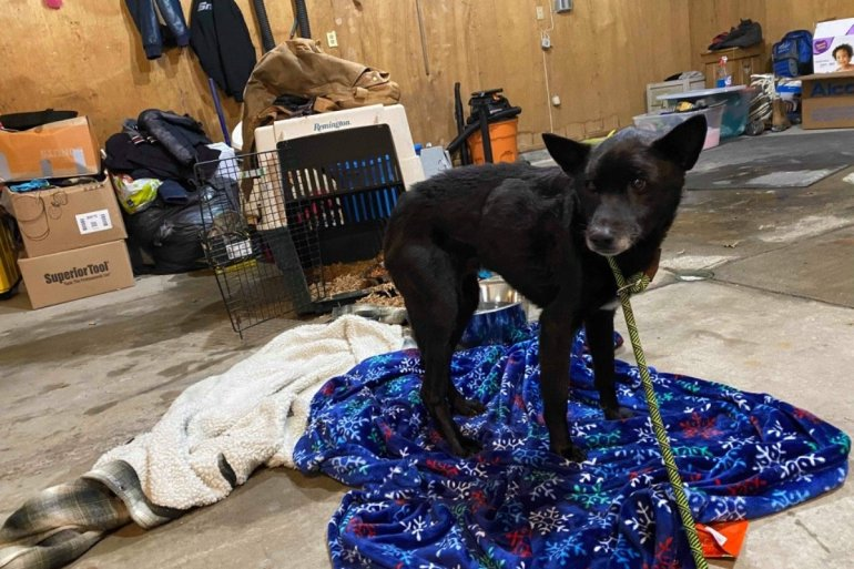 Family's dog, Boss, found alive -- photo from GoFundMe