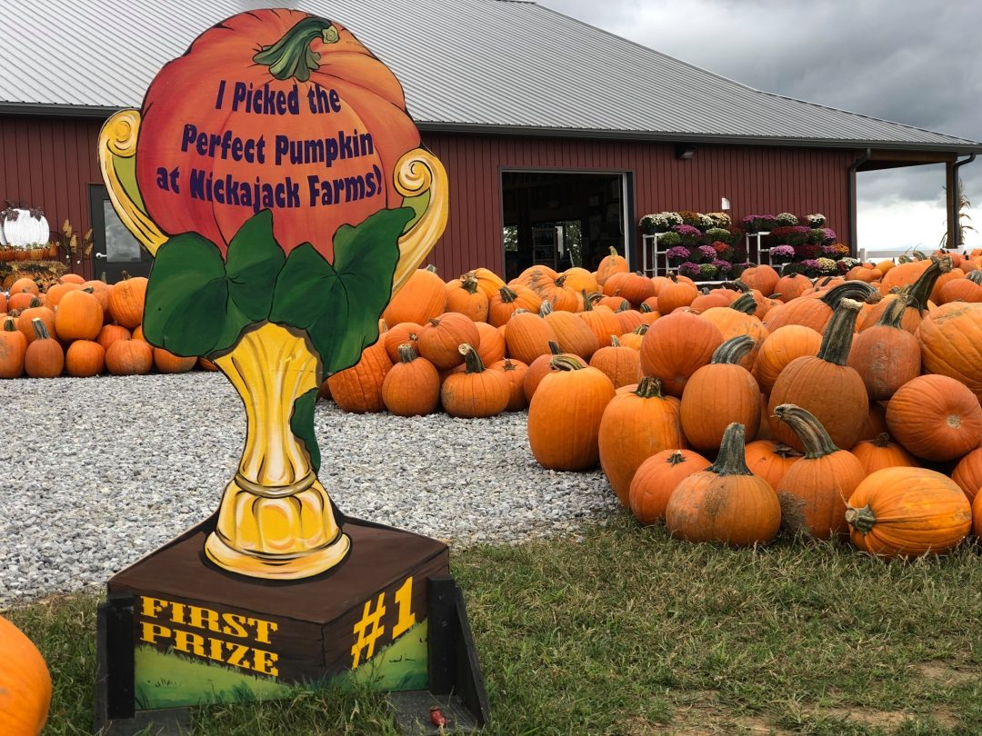 Northeast Ohio Fall Fun Guide 2020 Pumpkin Patches Corn Mazes Apple Picking And More