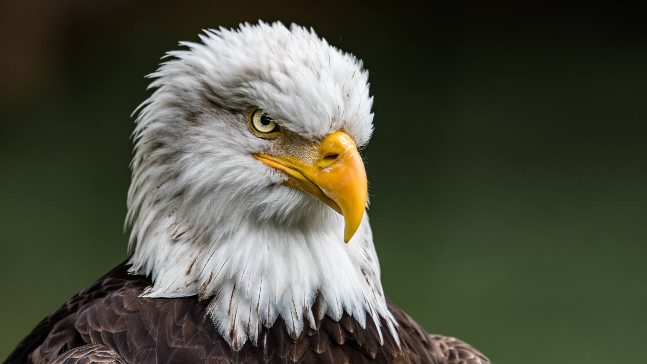 A bald eagle launched an aerial assault on a drone operated by the Michigan Department of Environment, Great Lakes, and Energy — known as EGLE — r