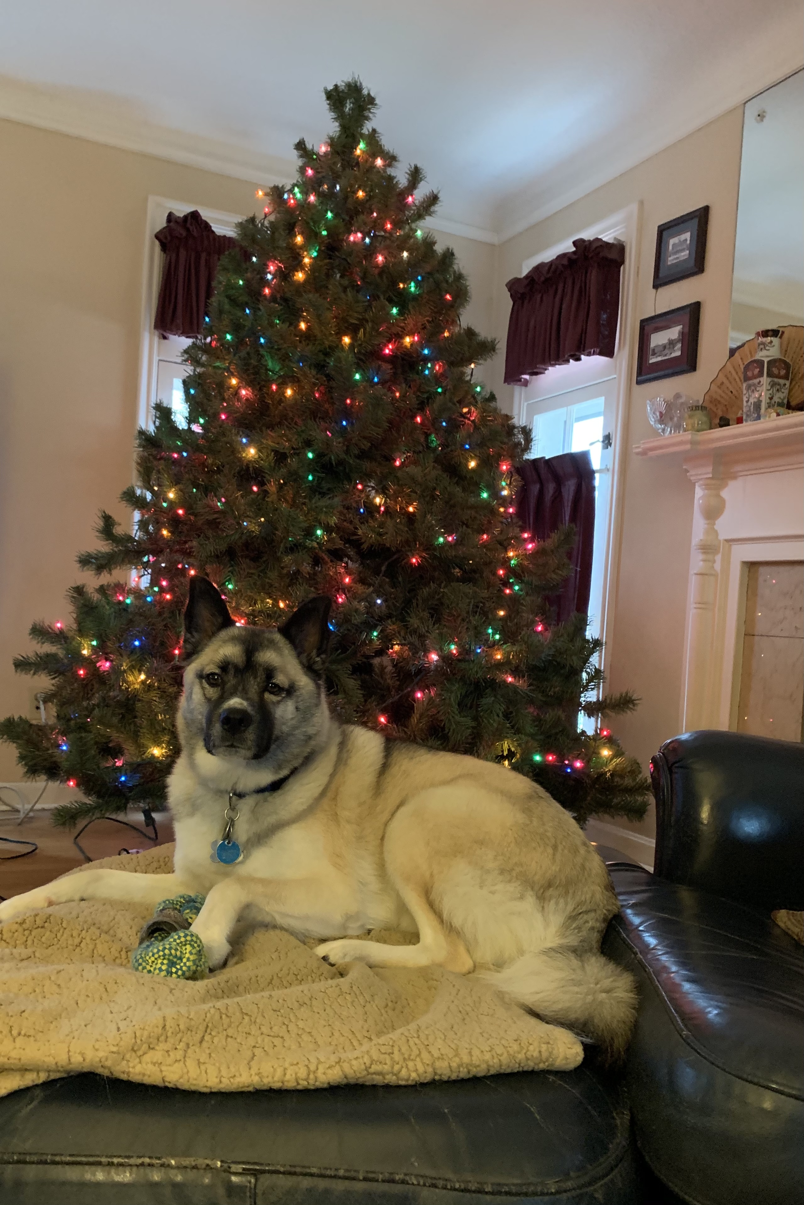 Photo Gallery Share Pictures Of Your Christmas Decorations With Us