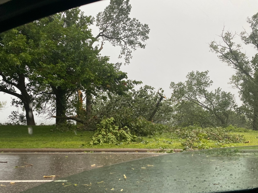 Downed trees in the Edgewater-Detroit Shoreway area.