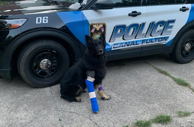 Canal Fulton retired K-9 Bishop in a cast