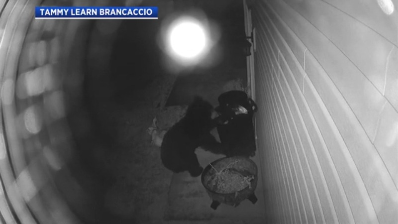 North Jackson bear caught on camera